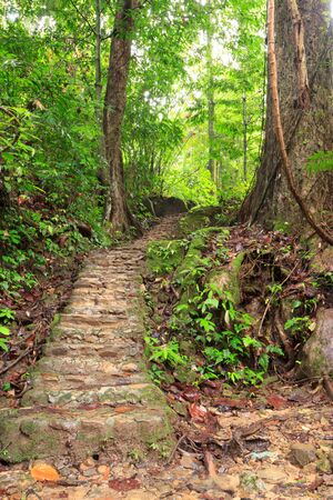 excursions: Excursions walk to waterfall on rainy day, phangnga,Thailand