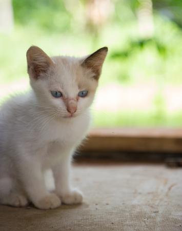 roan: Roan kitten