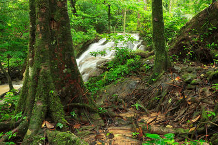 phangnga: Root in rainforest, phangnga,Thailand Stock Photo