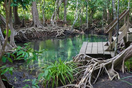 Tha pom mangrove forest, Krabi,Thailand Stock Photo