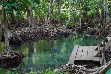 pom: Tha pom mangrove forest, Krabi,Thailand Stock Photo