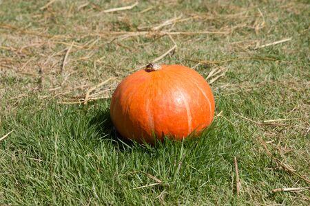 Pumpkin in a field