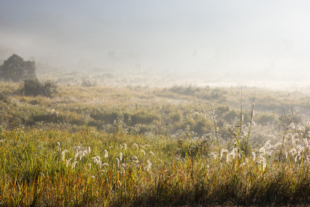 Grass field with misty on mountain in thailand