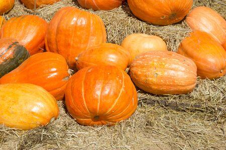 Pumpkin in a field of straw