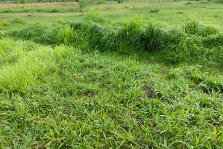 Grow grass to feed cattle
