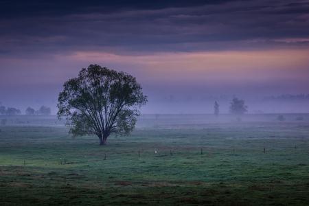Lonely tree about sunrise somewhere on Podlasie, Poland