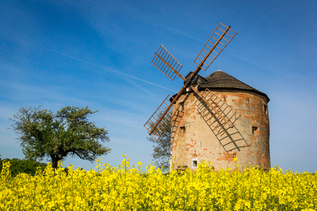 Old windmill and field rapeseed in Kunkovice village in South Moravia, Czech Republic