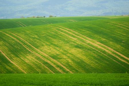 Moravian fields at spring near Litencice, Czech Republic