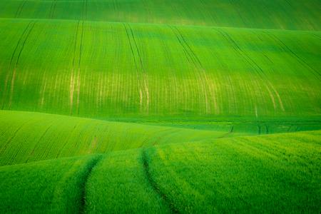 Waves on the Moravian fields near Kyjov, Moravia, Czech Republic