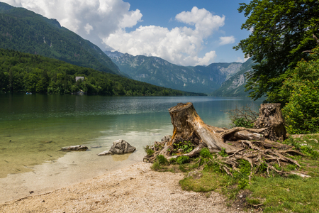 Bough over the Bohinj lake in Julian Alps, Triglav National Park, Slovenia