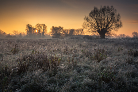 Sunrise over the meadow on a frosty morning