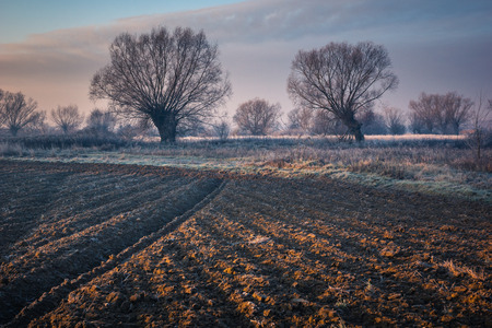 Landscape with willows on a frosty morning Banco de Imagens