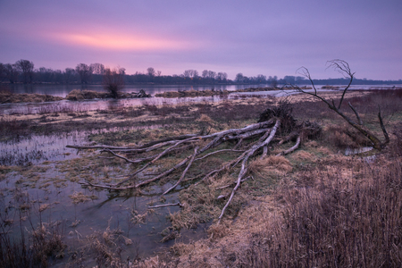 Dawn over the Vistula rivers and broken tree somehere in Poland