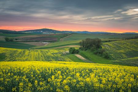 Moravian fields at spring near Sardice, Moravia, Czech Republic