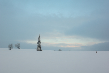 Snow-covered tree in Tatra mountains, Poland