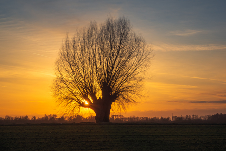 Lonely tree at sunset somewhere in Masovia, Poland
