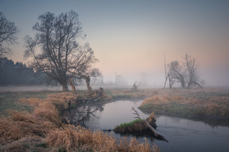 Foggy morning in the valley of the Jeziorka river near Piaseczno, Masovia, Poland