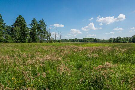 Meadow at sunny day in Kampinowski National Park, Masovia, Poland Stock Photo