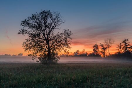 A tree during a misty sunrise near Piaseczno