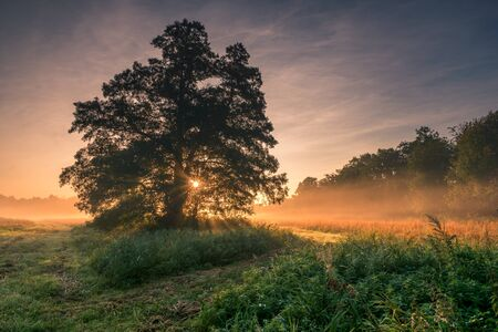 A tree during a misty sunrise near Piaseczno Stock Photo - 130068165