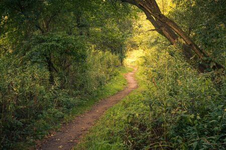 Path through the forest during a beautiful morning near Piaseczno, Poland Stock Photo