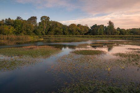Pond in Zalesie Dolne, Piaseczno, Poland Stock Photo - 130068221