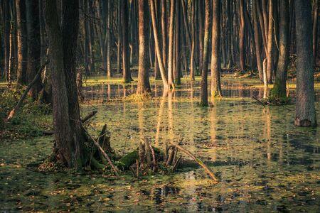 ポーランド・マソヴィアのピアセッズノ近くのスリュガ川の沼地と背水