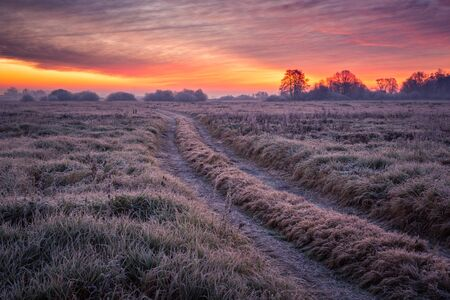 Road during a frosty morning in Oborskie Meadows, Konstancin Jeziorna, Poland