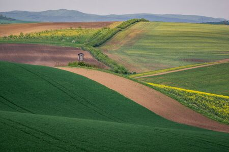 Moravian fields and meadows at spring near Karlin, Chech Republic