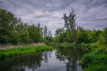 Jeziorka river during cloudy morning at spring near Piaseczno, Poland