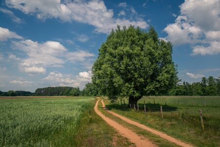 Dirt road and tree in the Liwiec river valley near Korytnica, Masovia, Poland