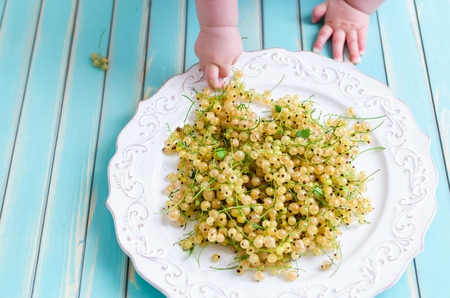 stretch out: Little baby child stretch out his hands with curiosity to take berries of summer fresh white currant on plate against stylized old aged turquoise wooden background top view. Rustic background with free text space.