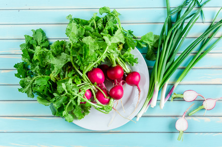 scallions: Fresh summer vegetables of radish on plate and bunch of green spring onions or scallions against stylized old aged wooden turquoise table background, top view. Rustic background with free text space.