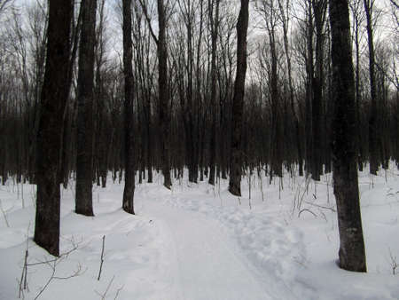 michigan snow: A snow covered path leads through a dark forest
