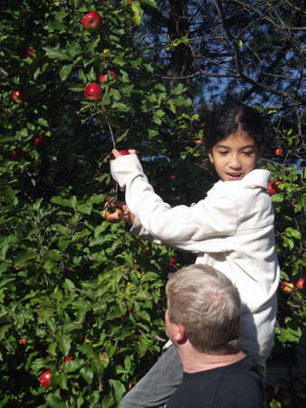 held down: Girl held up into tree to pick apples, looking down Stock Photo
