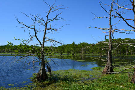 wildlife preserve: Blue Sky and Swampland in a wildlife preserve