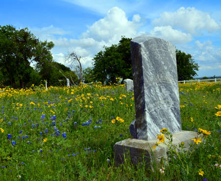 Old grave stone among wildflowers