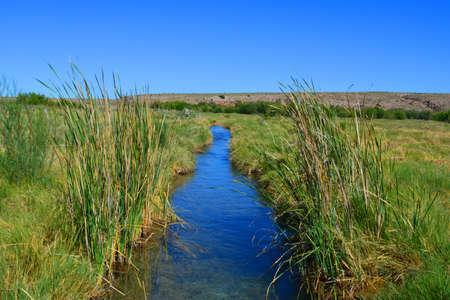 Desert stream in the middle of a marshland Imagens