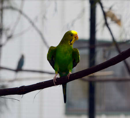 Single green parakeet perched on a branch