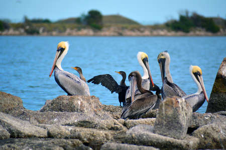 Various Sea Birds gathered on rocks Stock Photo