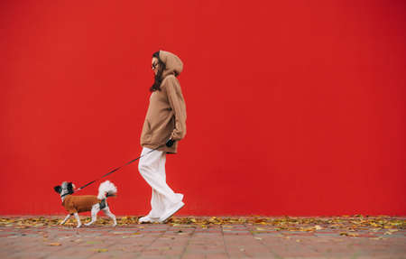 Stylish woman walks with a small dog on a leash on the street on a background of red walls. Owner walks with a dog on a background of a colored wall.