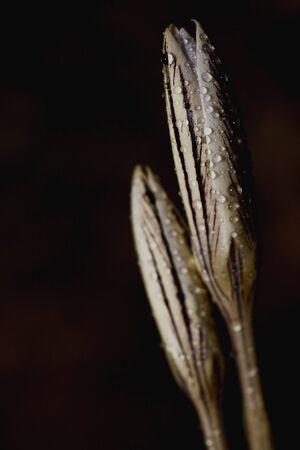 Beautiful flower in the dark Banco de Imagens