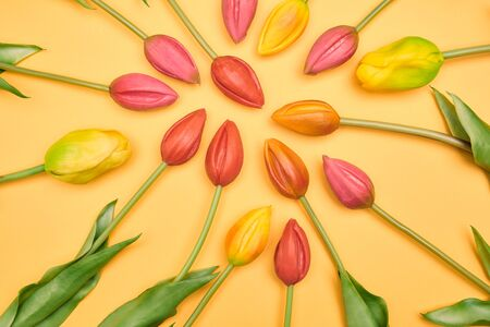 Colorful tulips with pastel background