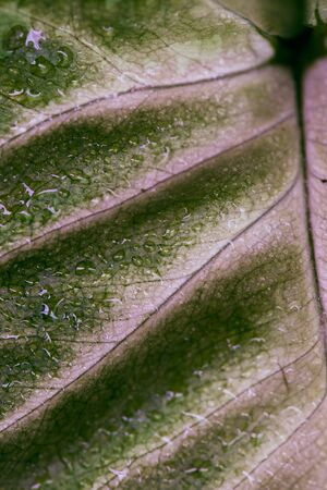 Macro of green leaf with veins and waterdrops.