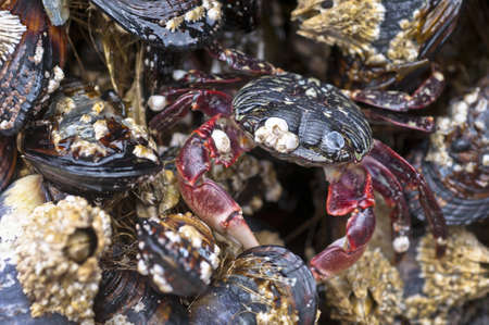 Crab in the tidal zone at low tide