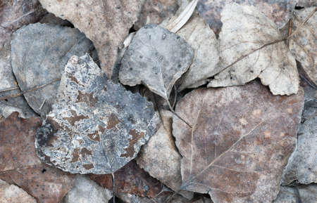 Colorful dead autumn leaves on the ground at winter Stock Photo - 18151661