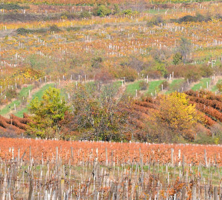 agricultural area: Autumn landscape of an agricultural area