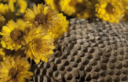 comb: Honey comb with flowers Stock Photo