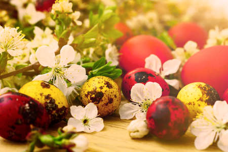 arbres fruitier: Easter eggs, flowers and fruit trees                                Banque d'images