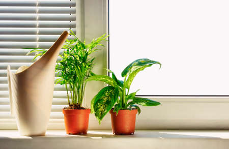 Indoor plants in pots on the window background 版權商用圖片 - 77082857